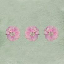 Λουλούδι Ροζ