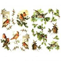 Ριζόχαρτο Πουλιά